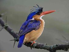 Free Songbird On Branch Stock Photos - 99545783