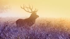 Free Male Elk In Field At Sunset Stock Photos - 99545813