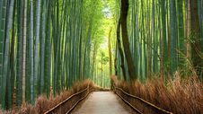 Free Bamboo Forest Royalty Free Stock Photography - 99545877