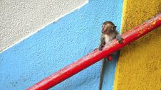 Free Little Monkey On Wall Royalty Free Stock Photography - 99545917