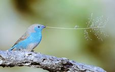 Free Small Songbird With Twig Stock Photo - 99545990