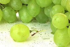 Free Green Vine. Stock Photo - 9960220