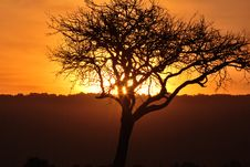 Free African Sunset Royalty Free Stock Photo - 9960895