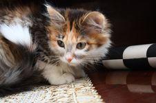 Beautiful Kitty Royalty Free Stock Photography