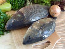 Free Carp Fish Stock Photography - 9962912