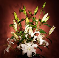 Free Bouquet Of White Lilies Royalty Free Stock Image - 9964496