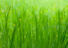 Free Green Grass Background Royalty Free Stock Photos - 9965718