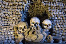 Free Skulls And Bones Stock Photos - 9965993