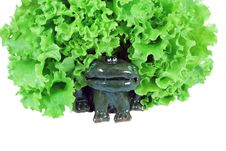 Free Frog With Salad Royalty Free Stock Image - 9966526