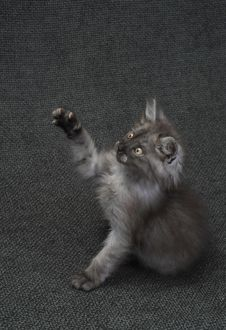 Free Small Kitty Royalty Free Stock Photos - 9968148