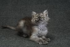 Free Small Kitty Stock Photo - 9968180