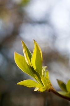 Free Tree Branch With Bud Stock Image - 9969431