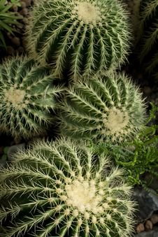 Free Green Cactuses Stock Photo - 9969440