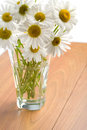 Free Bouquet Of Beautiful Camomiles Isolated Royalty Free Stock Photo - 9974985