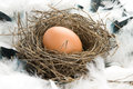 Free Egg In Nest Stock Images - 9975904