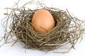 Free Egg In Nest Royalty Free Stock Photos - 9975918