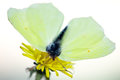 Free Yellow Butterfly Stock Image - 9976271