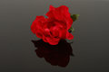 Free Red Rose Stock Photo - 9977880
