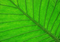 Free Tropical Leaf Detail Stock Photography - 9978032