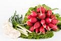 Free Spring Onions, Garlic, Lettuce And Radish Stock Image - 9979841