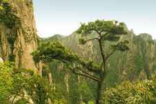 Free Pine Tree, Nature In China Stock Photography - 9970452