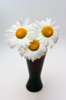 Free Chamomilles In Vase Stock Image - 9971371