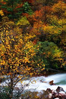 Free Fall Stock Image - 9971911