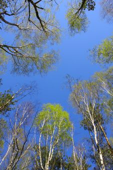 Free Sky In The Wood Stock Photos - 9974833