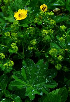Free Meadow After Rain Stock Image - 9975921