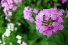 Purple Flower Background Stock Image
