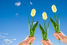 Free Three Tulips In Hands Royalty Free Stock Image - 9976626