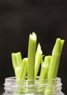 Free Celery Slices Stock Images - 9976754