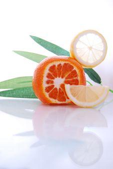 Free Citrus Stock Images - 9977434