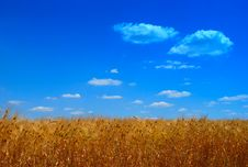 Free Field Of Wheat Royalty Free Stock Photos - 9977508