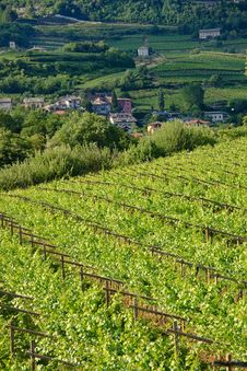 Free Vineyard Landscape Royalty Free Stock Photography - 9978607
