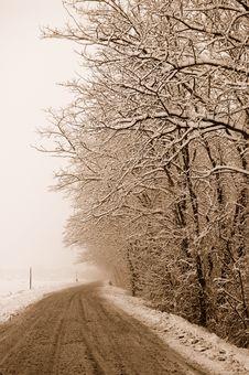 Free Tree Stock Photo - 9978820