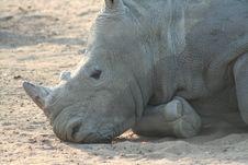 Free Rhino Stock Image - 9979221