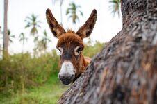 Free Donkey Baby Stock Image - 99725851