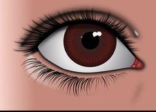 Free Eyelash, Eye, Eyebrow, Close Up Royalty Free Stock Photography - 99752017