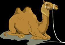 Free Camel, Camel Like Mammal, Arabian Camel, Mammal Royalty Free Stock Image - 99753046