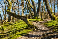 Free Tree, Woodland, Nature, Woody Plant Stock Images - 99753584
