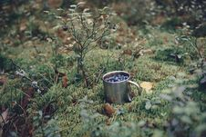 Free Blueberries In Metal Cup In Forest. Fresh Blueberries In Metal C Royalty Free Stock Images - 99785149