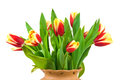 Free Flowers In Vase Royalty Free Stock Images - 9983269