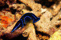 Free Nudibranch Royalty Free Stock Photography - 9987887