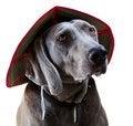 Free Weimaraner Dog Royalty Free Stock Photo - 9988955