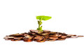 Free Plant In Coins Royalty Free Stock Images - 9989079