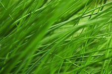 Free Very Juicy Grass Stock Photo - 9980020