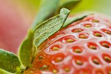 Free Delicious Strawberry Macro Royalty Free Stock Photos - 9980058