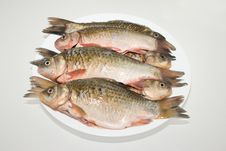 Free Fish Royalty Free Stock Image - 9980116