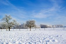 Free Snowy Nature. Stock Images - 9981514